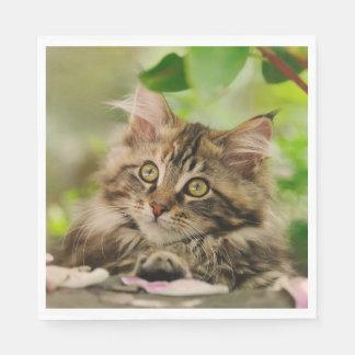 Cute Maine Coon kitten Napkin