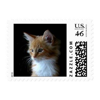 Cute Maine Coon kitten postage stamps