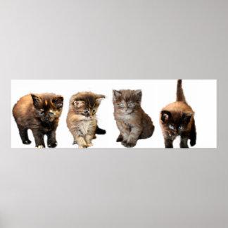 Cute Maine Coon Kitten Poster