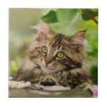 Cute Maine Coon kitten Small Square Tile