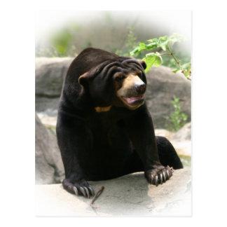 Cute Malaya sun bear Postcard
