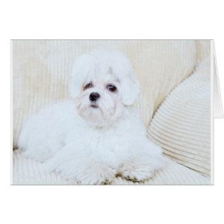 Cute Maltese Dog Card