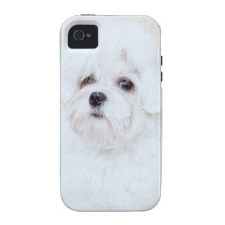 Cute Maltese Dog iPhone 4/4S Cases