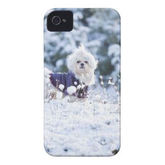 Cute Maltese Dog iPhone 4 Case-Mate Cases