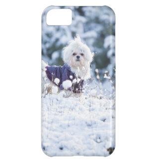 Cute Maltese Dog iPhone 5C Covers