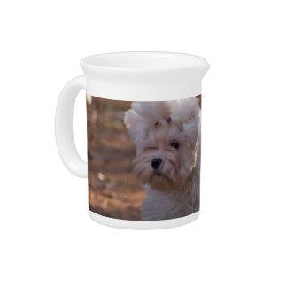 Cute Maltese Dog Drink Pitchers