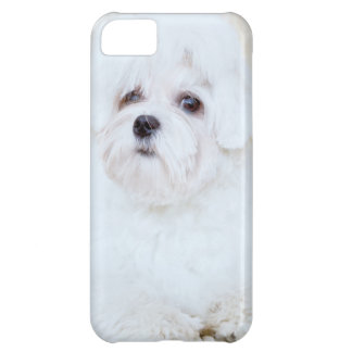 Cute Maltese Dog iPhone 5C Case