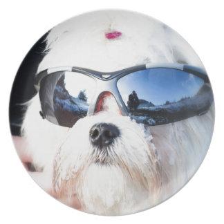 Cute Maltese Dog Plate