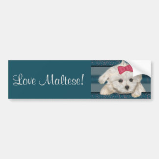 Cute Maltese Dog with Creme Fur and Red Ribbon Bumper Sticker