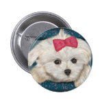 Cute Maltese Dog with Creme Fur and Red Ribbon Pins