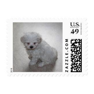 Cute Maltese Puppy Dog Stamp