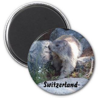 Cute marmot Switzerland 2 Inch Round Magnet