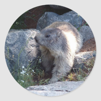 Cute marmot Switzerland Classic Round Sticker