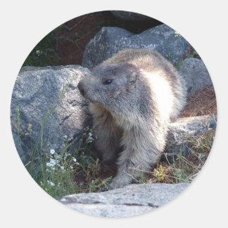 Cute marmot Switzerland Sticker