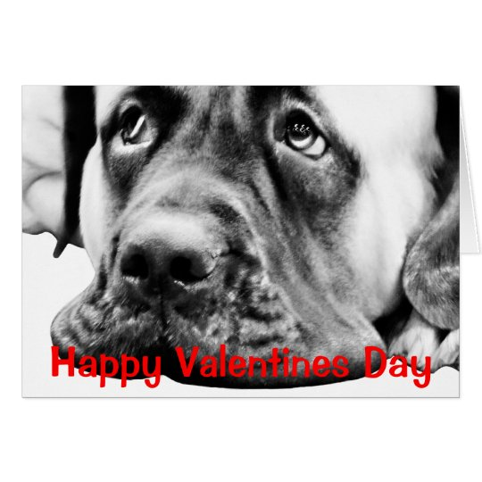 Cute Mastiff dog Card