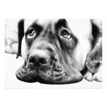 Cute Mastiff dog Personalized Invitations