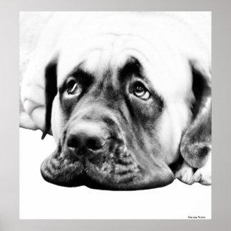 Cute Mastiff dog Print