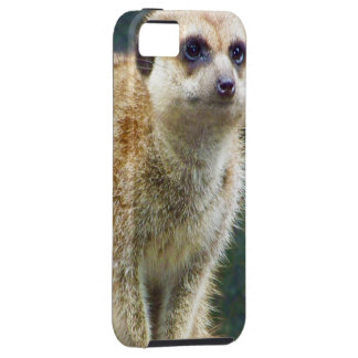 Cute Meerkat at Attention, Kansas City Zoo iPhone 5 Cover