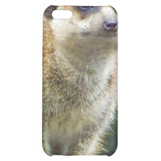 Cute Meerkat at Attention, Kansas City Zoo Case For iPhone 5C