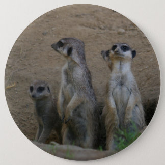 Cute Meerkat Family saying Hello Pinback Button