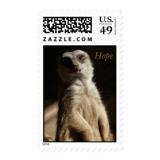 """Cute Meerkat """"HOPE"""" US Postage Stamp NEW!"""
