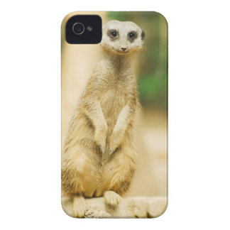 Cute Meerkat iPhone 4, Barely There case