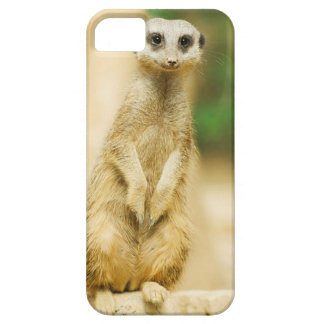 Cute Meerkat iPhone 5/5S, Barely There case