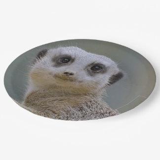 Cute meerkat paper plate