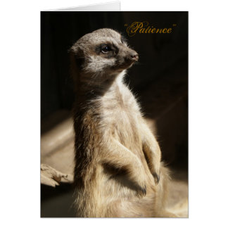 Cute Meerkat Patience Any Occasion Greeting Card