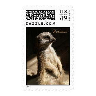 """Cute Meerkat """"Patience"""" US Postage Stamp NEW!"""