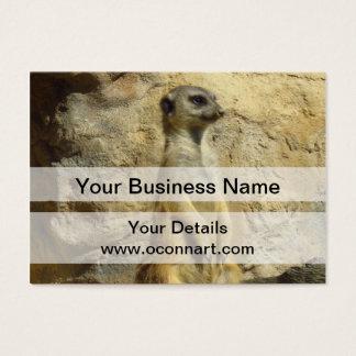 Cute meerkat photograph business card