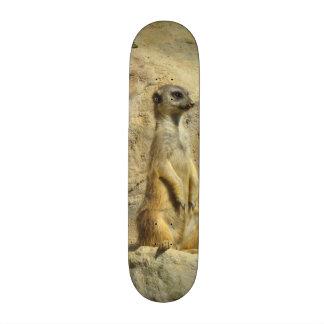 Cute meerkat photograph skate board