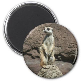 Cute Meerkat Sitting on a Mound Magnet