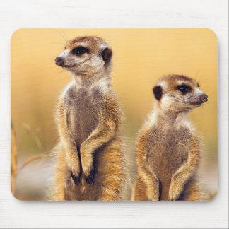 Cute Meerkats sitting up Mouse Pad
