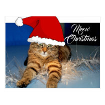 Cute Meow Christmas Postcard with Holiday Greeting