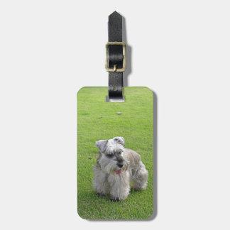 Cute Mini Schnauzer In Grass Luggage Tag