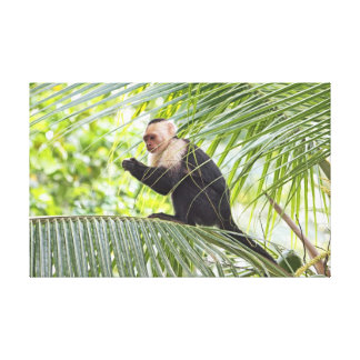 Cute Monkey on a Palm Tree Stretched Canvas Print