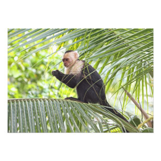 Cute Monkey on a Palm Tree Custom Announcements