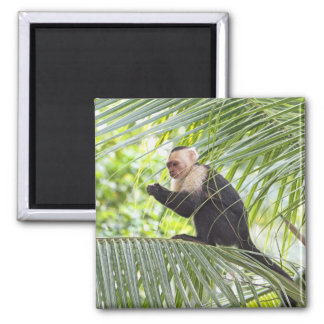 Cute Monkey on a Palm Tree Magnet