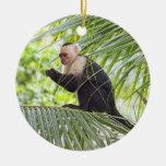 Cute Monkey on a Palm Tree Ornament