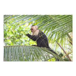 Cute Monkey on a Palm Tree Photo Print