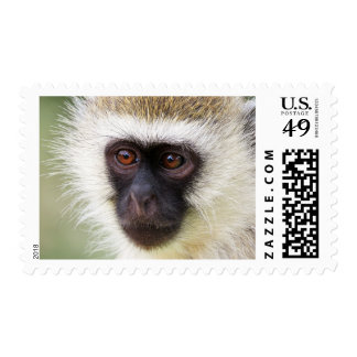 Cute monkey portrait postage