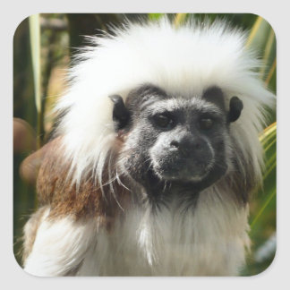 Cute Monkey Square Sticker