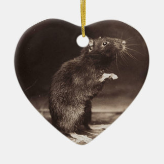 Cute Morbid Rat Early Photography Ceramic Ornament