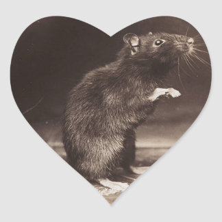 Cute Morbid Rat Early Photography Heart Sticker
