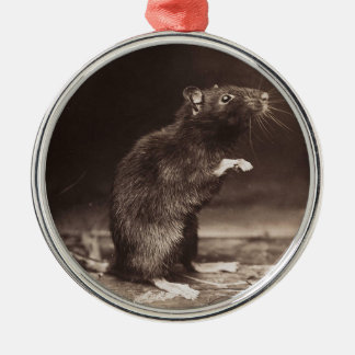 Cute Morbid Rat Early Photography Metal Ornament