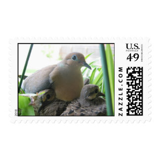 Cute Morning Doves In The Green Plant Postage Stamp