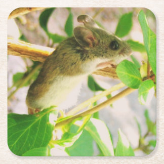 Cute Mouse Party Coaster
