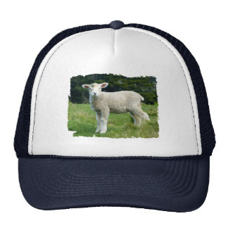 Cute Muddy Baby Sheep Lamb in a Meadow Trucker Hat