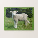 Cute Muddy Lamb in Meadow Ragged Edge Design Jigsaw Puzzles